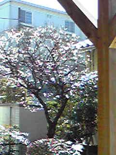 Image272.jpg