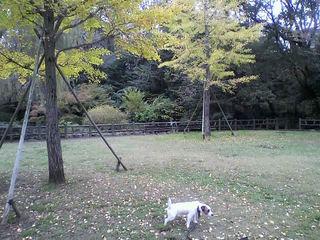 11-11-15_004.jpg