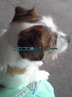 Image731.jpg