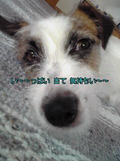 Image779.jpg